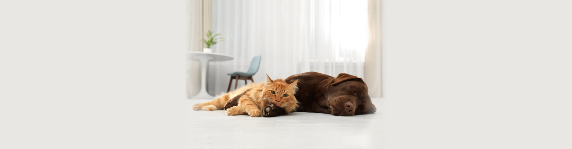 Cat and dog looking at camera on floor